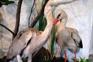 Prírodné zaujímavosti z ríše zvierat tepličianskeho chotára.