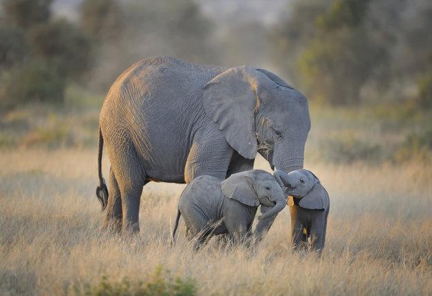 Divoká príroda v Keni je dejiskom krásnych dobrodružstiev.