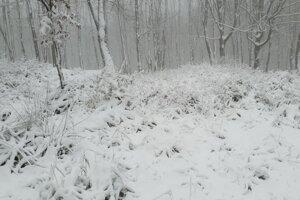 V Malých Karpatoch nasnežilo.