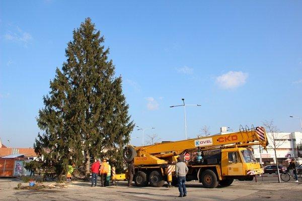 Vianočný strom v Malackách.