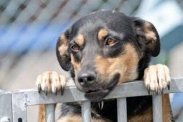 Do útulku vlani prijali 220 psov. Z toho 50 vrátili pôvodným majiteľom a sto umiestnili v nových rodinách.