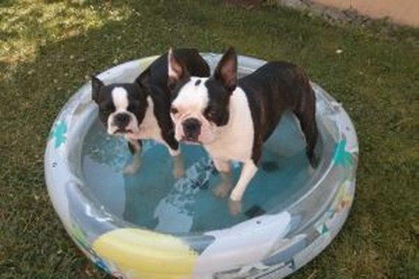 Počas letných horúčav treba dopriať osvieženie vo vode aj psíkom.