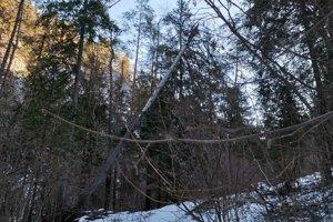 Poškodený strom ohrozoval turistov na chodníku.