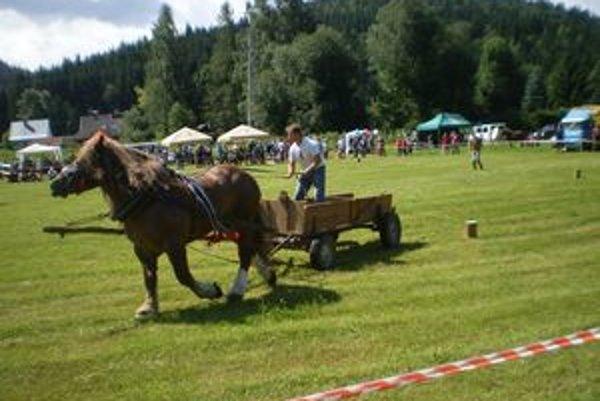 Pri práci s ťažným koňom je veľmi dôležitá súhra človeka so zvieraťom.