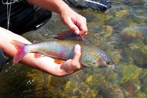 Znižujúci sa počet lipňov v riekach je dramatický.