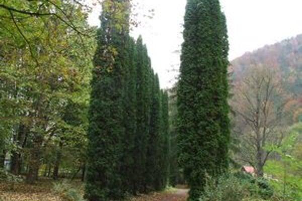 Takmer v centre Ľubochne sa nachádza aj prekrásny park s oddychovými miestami.