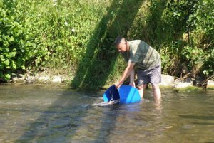 Pstruhy vypustili v plytkej vode rieky Nitry.