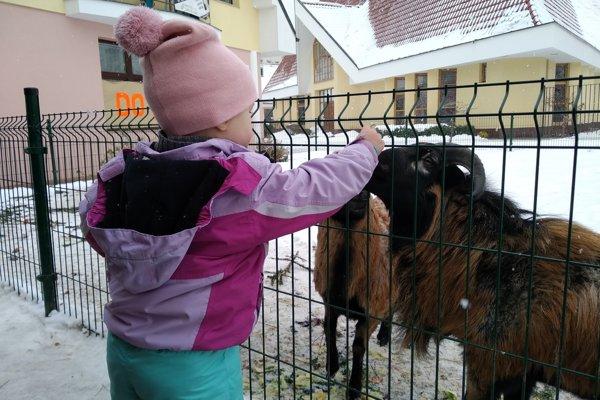 Minifarma bola obľúbeným miestom pre deti zo Soliniek.