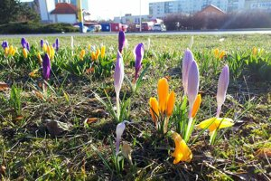 Prešov v týchto dňoch kvitne