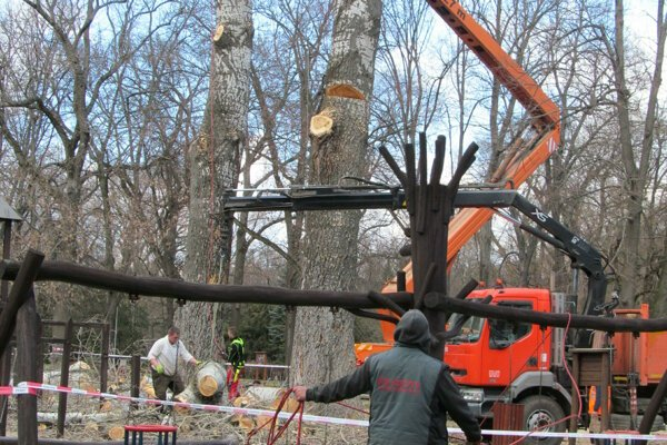 Len nedávno dalo mesto orezať nestabilné stromy na detskom ihrisku v parku.