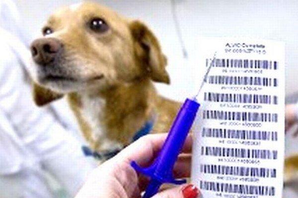 Od januára 2014 bude čip potrebovať iba zviera vyvážané za hranice.