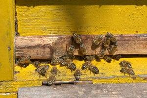Asi stotisíc včiel nájde nový domov v mestskom kine.