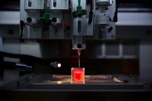 Prvá 3D kópia ľudského srdca s tkanivom a cievami, ktorú vytlačili vedci na Telavivskej univerzite.
