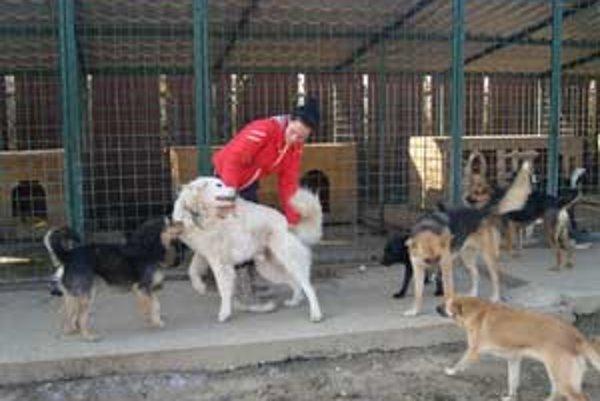 Dobrovoľníčka Saša má rada všetkých štvornohých obyvateľov útulku a vzorne sa o nich stará.