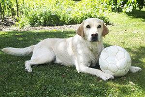 Pes už nie je len priateľom človeka ale aj členom rodiny.