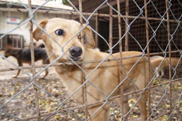 Pre opustených psov je  útulok záchrannou stanicou.