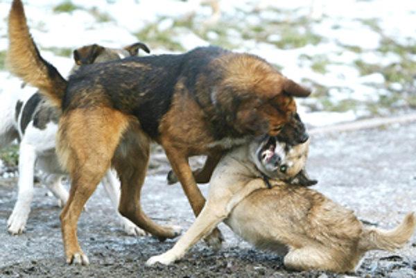 V poslednej dobe na mestskom úrade pribúda sťažností na svorky túlavých psov.
