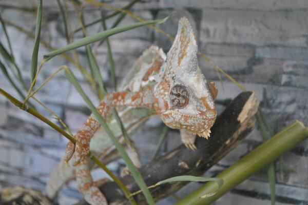 Na výstave Svet fauny môžu návštevníci vidieť zvieratáz celého sveta.