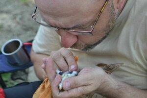 Ornitológ zisťuje pohlavie operenca.