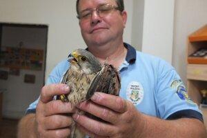 Mestských policajtov privolali k vysilenému dravcovi. Na snímke Anton Moško so zachráneným vtákom.
