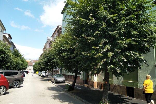 Stromy na Moyzesovej ulici označili oranžovou značkou. Na výrub nepôjdu.