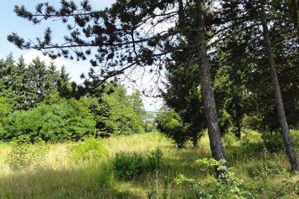 Pozemok pod bývalým školským areálom v Môťovej je veľký viac ako jeden hektár.