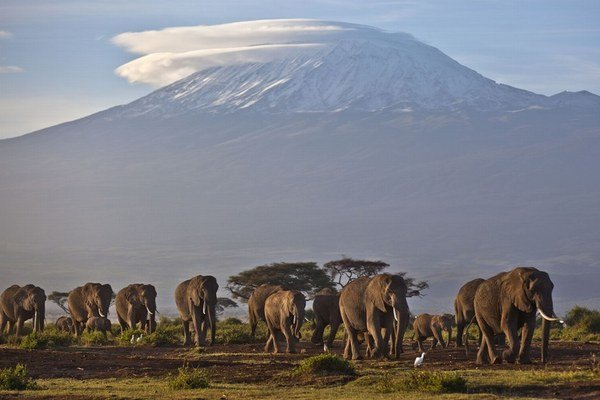 Zabitie vedúceho slona môže rozvrátiť život celého stáda.