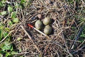 Injkečné striekačky nosia na ostrov vtáci čoraz častejšie