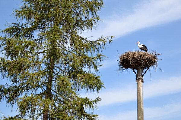 Bocianom sa v Sninskom okrese v tomto roku darí.