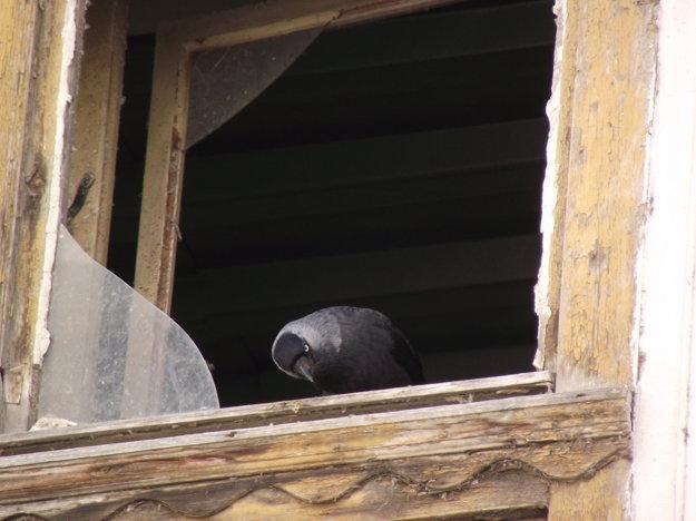 V dome sa usídlili holuby.