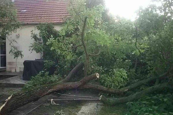 Hasiči pomáhali pri odstraňovaní popadaných stromov.