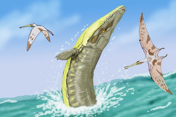 Dakosaurus maximus.