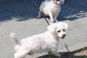 Mariku sprevádzali aj jej psíčkovia.