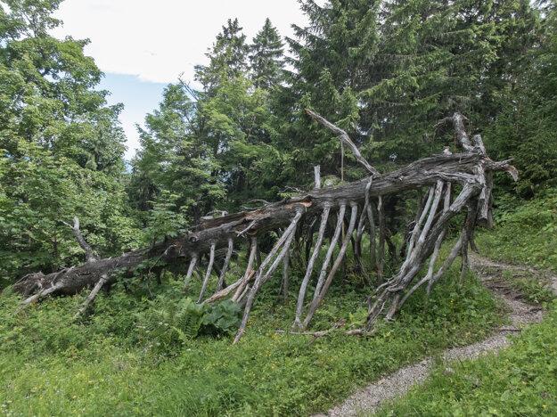Tento strom je mŕtvy len napohľad - jeho drevo dáva život množstvu hmyzu.