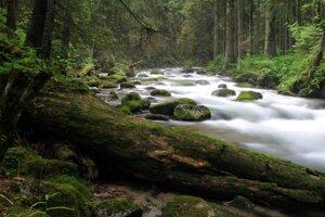 Studený potok pri Zuberci.