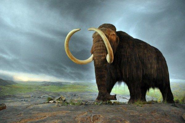 Model mamuta z britského múzea.