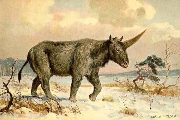 Umelecké stvárnenie druhu Elasmotherium od maliara prehistorických zvierat Heinricha Hardera.