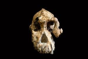 Lebka vyhynutého druhu Australopitek anamensis.