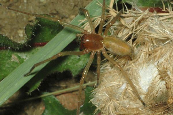 Pavúka objavili na území obce Kúty.