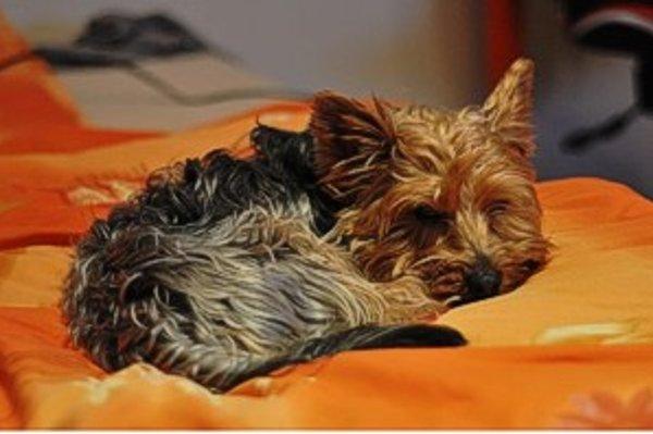 Vďaka novému obojku budete mať aj mimo domova presné informácie o aktivitách vášho psa.