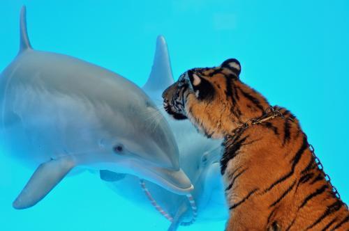 tiger-delfin_tasrap.jpg