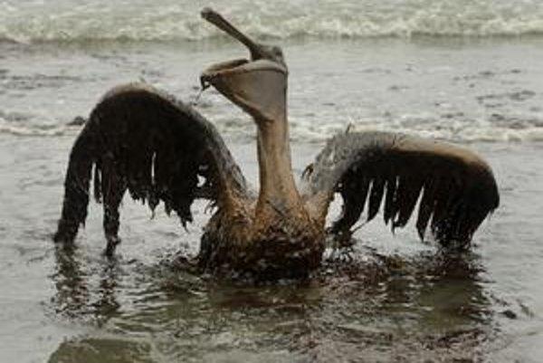 Ropou zasiahnutých živočíchov na hladine, ako sú pelikány, korytnačky či kraby, boli tisícky. Ropa však zabíjala aj organizmy na dne zálivu.