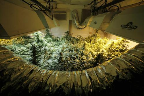 marihuana2_tasrap.jpg