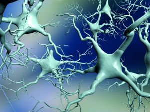 neurony1.jpg