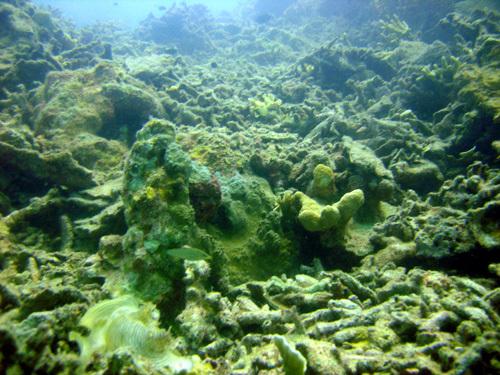 koralovy_utes_mrtvy_2.jpg