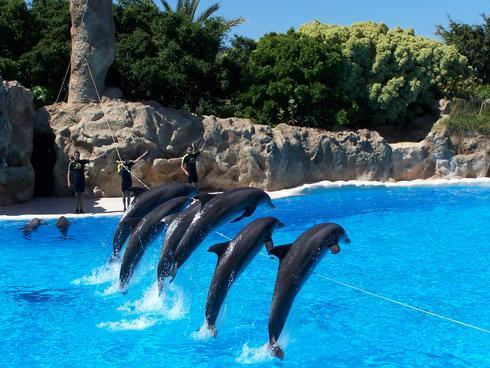 sm-0624-021c-delfin.rw_res.jpg