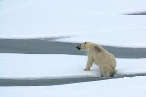 Topenie ľadu ohrozuje medvede.