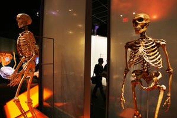 Vľavo kostra anatomicky moderného človeka, vpravo neandertálca. Rozdiel vidieť na prvý pohľad.
