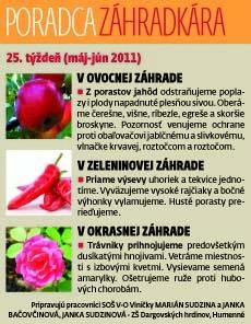 zah24.jpg