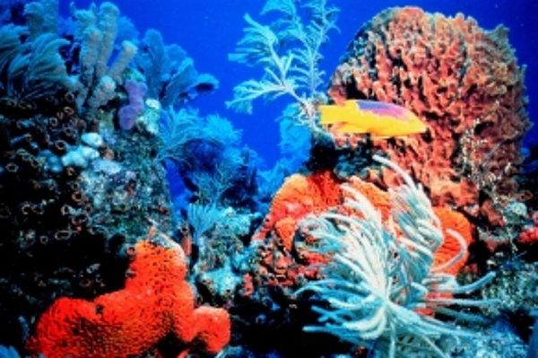 Koralový útes.